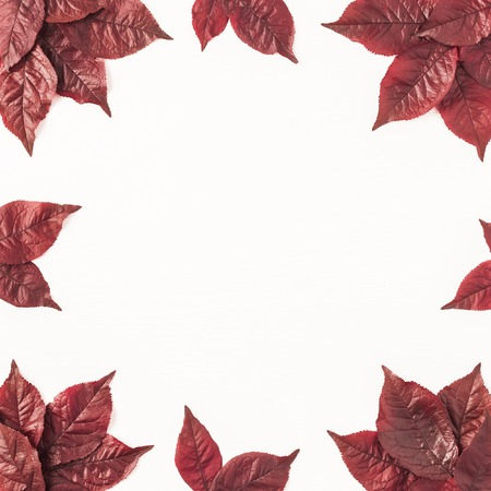 Autumn composition. Frame made of autumn red leaves on white background. Flat lay, top view, copy space, square 写真素材