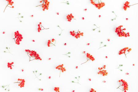 秋季構圖。在白色背景上由rowan漿果製成的圖案。