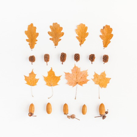 Autumn composition. Autumn leaves, pine cones, acorns on white background. Flat lay, top view, square 版權商用圖片