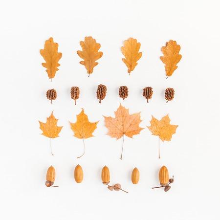 Composición del otoño. Hojas de otoño, conos de pino, bellotas sobre fondo blanco. Piso plano, vista desde arriba, cuadrado