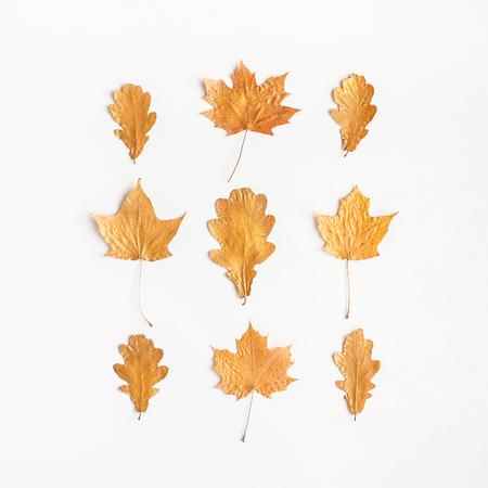 Jesienna kompozycja. Jesienią liści klonu drzewa na białym tle. Płaskie leżanki, widok z góry, kwadrat
