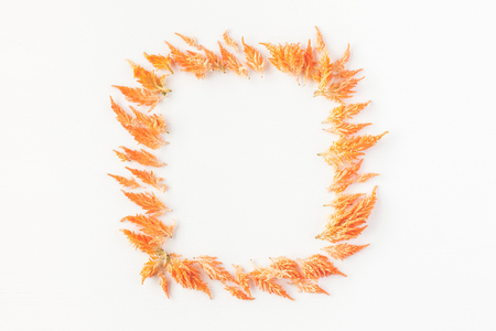 Autumn composition. Frame made of autumn flowers. Flat lay, top view, copy space 版權商用圖片