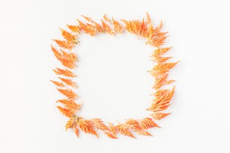 Jesienna kompozycja. Rama wykonana z jesieni kwiatów. Płaski, górny widok, miejsce na kopię