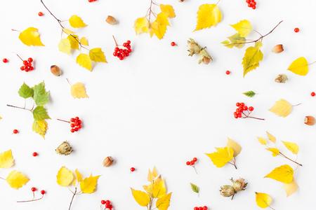 秋天框架由白樺樹葉,羅訥莓果,榛子在白色背景上。秋天秋天的概念。平躺,頂視圖,副本空間