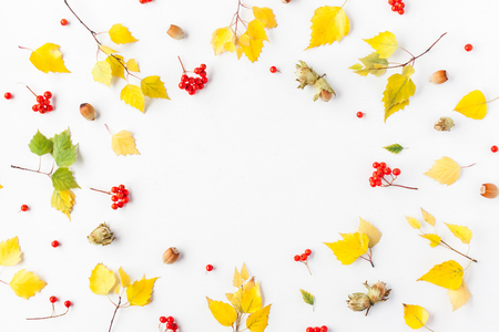 Autumn frame made of birch tree leaves, rowan berries, hazelnuts on white background. Autumn, fall concept. Flat lay, top view, copy space Archivio Fotografico