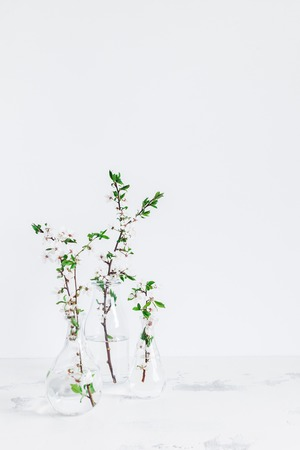 Flowers composition. Apple tree flowers in vase. Front view 写真素材