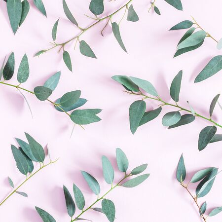 Eucalyptus leaves on pink background. Pattern made of eucalyptus branches. Flat lay, top view, square Archivio Fotografico