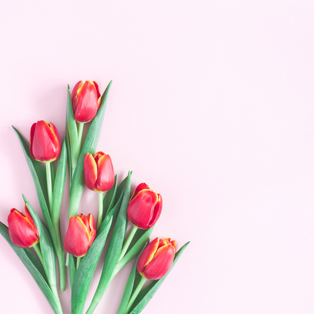Flowers composition. Red tulip flowers on pink background. Flat lay, top view, copy space, square