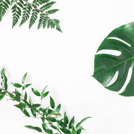 Green tropical leaves on white background. Flat lay, top view, square, copy space Фото со стока