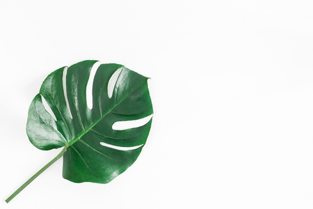 Monstera leaf. Green tropical leaf on white background. Flat lay, top view, copy space Stok Fotoğraf - 95436106