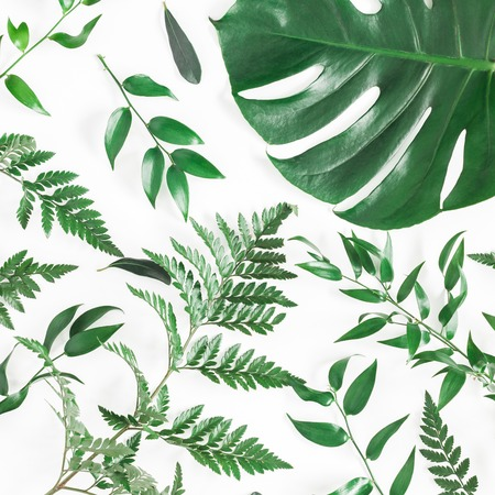 Leaf pattern. Green tropical leaves on white background. Flat lay, top view, square