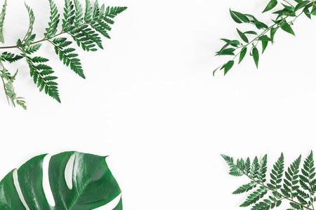Blad patroon. Groene tropische bladeren op witte achtergrond. Plat lag, bovenaanzicht, kopie ruimte Stockfoto