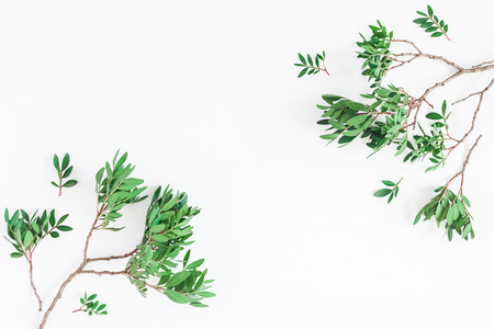 Leaf pattern. Pistachio leaves on white background. Flat lay, top view, copy space