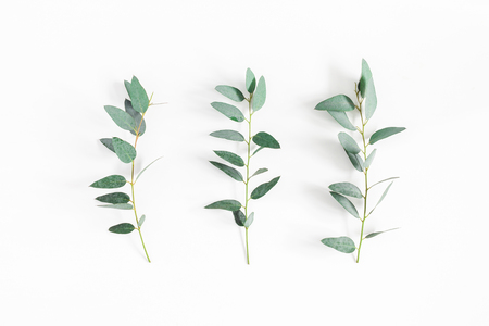 Eucalyptus leaves on white background. Pattern made of eucalyptus branches. Flat lay, top view 스톡 콘텐츠