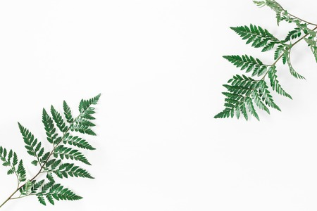 Fern leaves. Green tropical leaves on white background. Flat lay, top view, copy space, square
