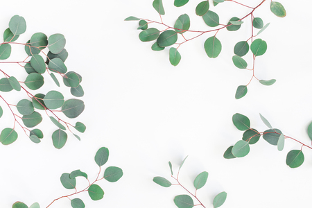 Eucalyptus leaves on white background. Frame made of eucalyptus branches. Flat lay, top view, copy space Standard-Bild - 97103281