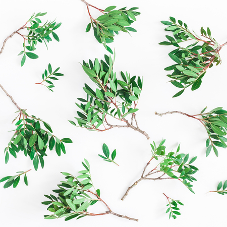 Leaf pattern. Pistachio leaves on white background. Flat lay, top view, square