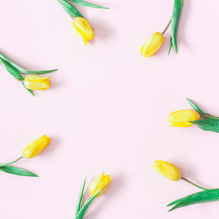 Flowers composition. Yellow tulip flowers on pink background. Flat lay, top view, copy space, square
