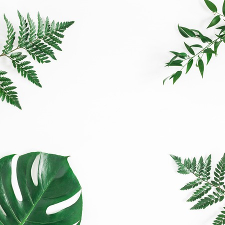 Green tropical leaves on white background. Flat lay, top view, square, copy space Stockfoto
