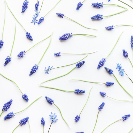 Flowers composition. Pattern made of muscari flowers on white background. Flat lay, top view