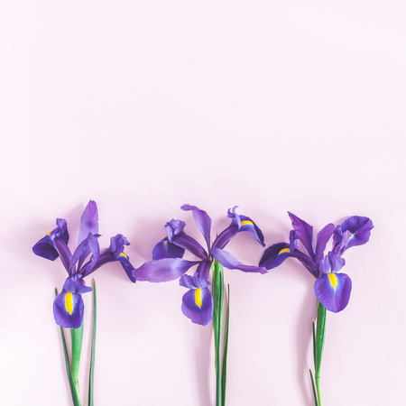 Flowers composition. Spring iris flowers on pink background. Flat lay, top view, square, copy space Reklamní fotografie - 97996856
