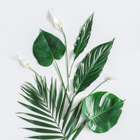Summer tropical composition. Green tropical leaves and white flowers on gray background. Summer concept. Flat lay, top view, square Stock Photo