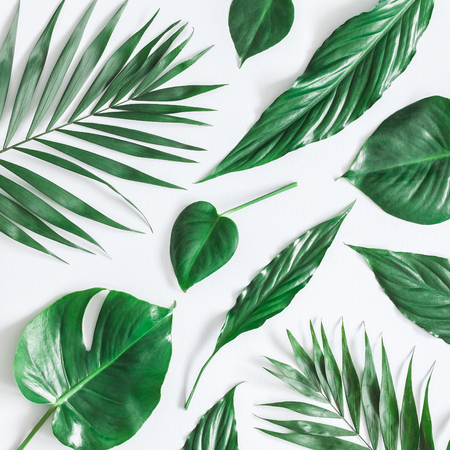 Leaf pattern. Green tropical leaves on gray background. Summer concept. Flat lay, top view, square
