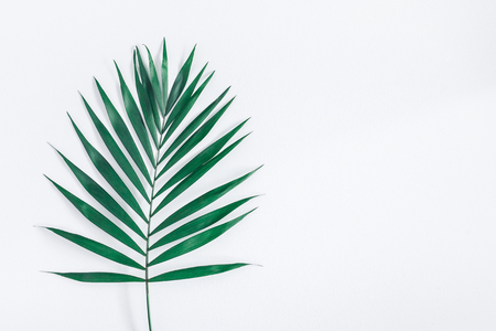 Leaf pattern. Green tropical leaf on gray background. Summer concept. Flat lay, top view, copy space