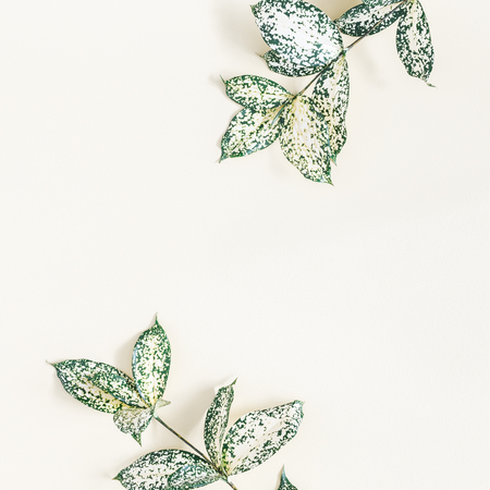 Leaf pattern. Tropical leaves on yellow background. Summer concept. Flat lay, top view, copy space, square Stock Photo