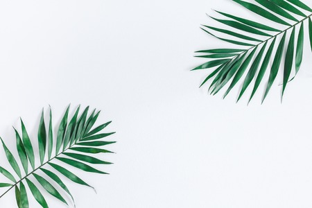 Leaf pattern. Green tropical leaves on gray background. Summer concept. Flat lay, top view, copy space Stock Photo