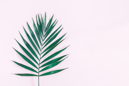 Summer tropical composition. Green tropical leaf on pink background. Summer concept. Flat lay, top view, copy space
