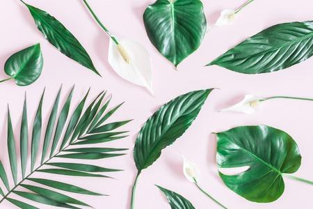 Letnia kompozycja tropikalna. Zielone tropikalne liście i białe kwiaty na różowym tle. Koncepcja lato. Leżał na płasko, widok z góry