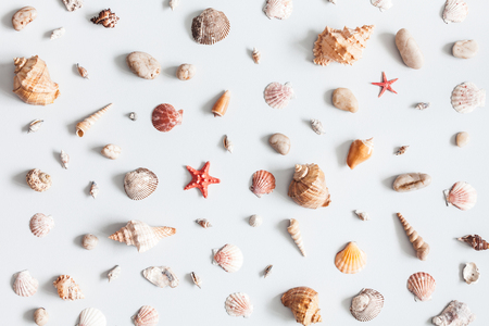 Sea shells pattern on gray background. Summer concept. Flat lay, top view