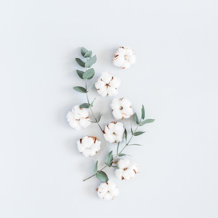 Composición de flores. Patrón de flores de algodón y ramas de eucalipto sobre fondo azul pastel. Endecha plana, vista superior, cuadrado