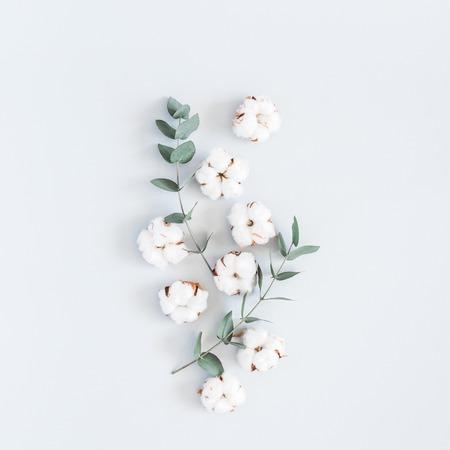 Kompozycja kwiatów. Wzór wykonany z bawełnianych kwiatów i gałązek eukaliptusa na pastelowym niebieskim tle. Leżał na płasko, widok z góry, kwadratowy