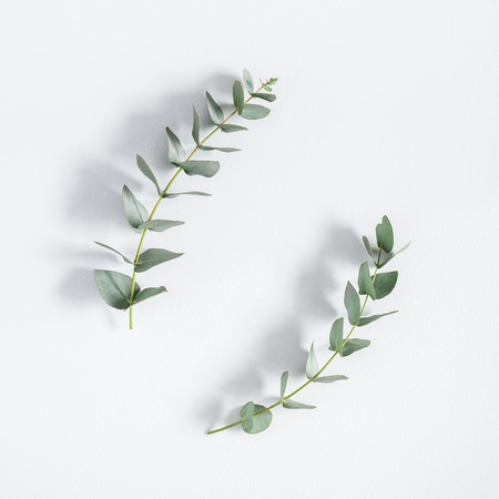 Eucalyptus branches on pastel gray background. Flat lay, top view, square, copy space