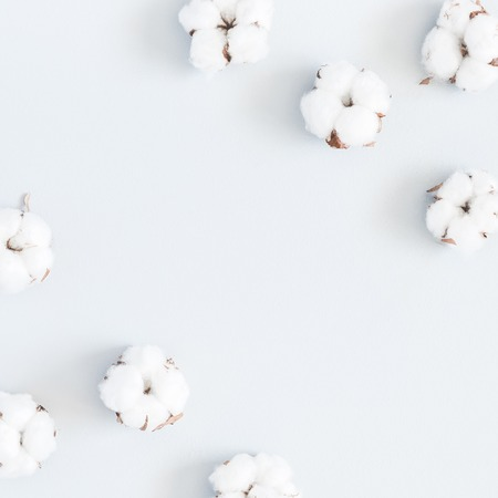 Flowers composition. Pattern made of cotton flowers on pastel blue background. Flat lay, top view, square, copy space