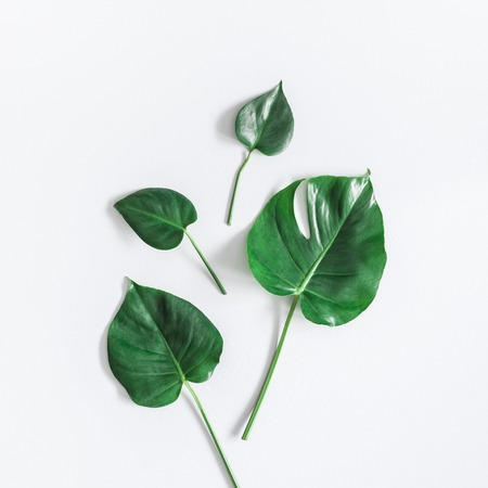 Leaf pattern. Green tropical monstera leaves on gray background. Summer concept. Flat lay, top view, square