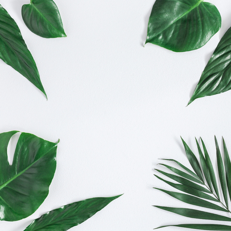 Leaf pattern. Green tropical palm leaves on gray background. Summer concept. Flat lay, top view, copy space, square 版權商用圖片