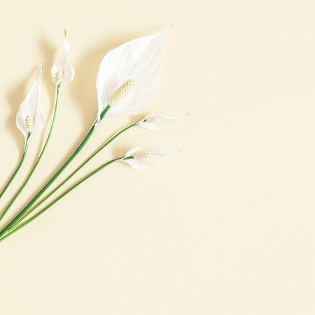 Flowers composition. Tropical flowers on pastel yellow background. Flat lay, top view, square, copy space