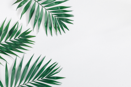 Leaf pattern. Green tropical leaves on gray background. Summer concept. Flat lay, top view, copy space 版權商用圖片