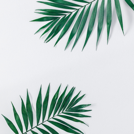 Summer tropical composition. Green tropical leaves on gray background. Summer concept. Flat lay, top view, copy space, square
