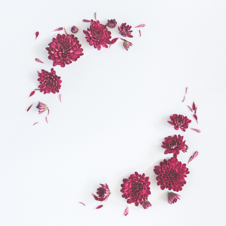 Flowers composition. Chrysanthemum flowers on pastel gray background. Flat lay, top view, copy space, square
