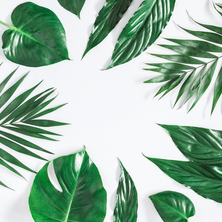 Leaf pattern. Green tropical palm leaves on pastel gray background. Summer concept. Flat lay, top view, copy space, square Zdjęcie Seryjne