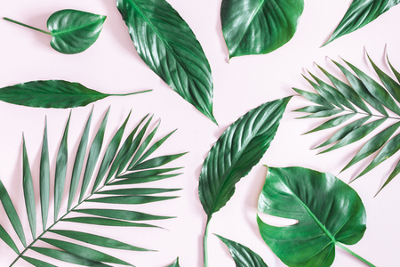 Summer tropical composition. Green tropical palm leaves on pastel pink background. Summer concept. Flat lay, top view