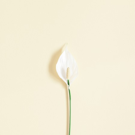 Flowers composition. Tropical flowers on pastel yellow background. Flat lay, top view, square