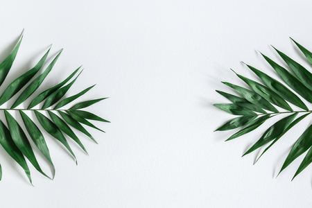 Tropical palm leaves on gray background. Summer concept. Flat lay, top view, copy space 写真素材