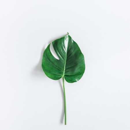 Green tropical monstera leaf on gray background. Summer concept. Flat lay, top view, square