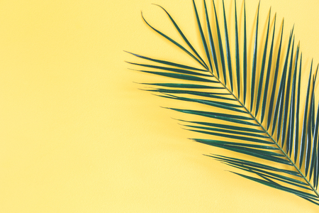 Tropical palm leaf on yellow background. Summer concept. Flat lay, top view, copy space, close up
