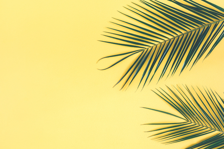 Tropical palm leaves on yellow background. Summer concept. Flat lay, top view, copy space, close up